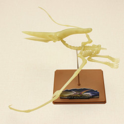 Eastcolight DIY Luminous Pteranodon Dinosaur Fossil Model Educational Toy